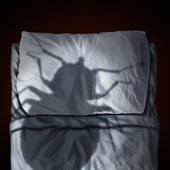 Sintomi cimici da letto roma - Cimici da letto ...